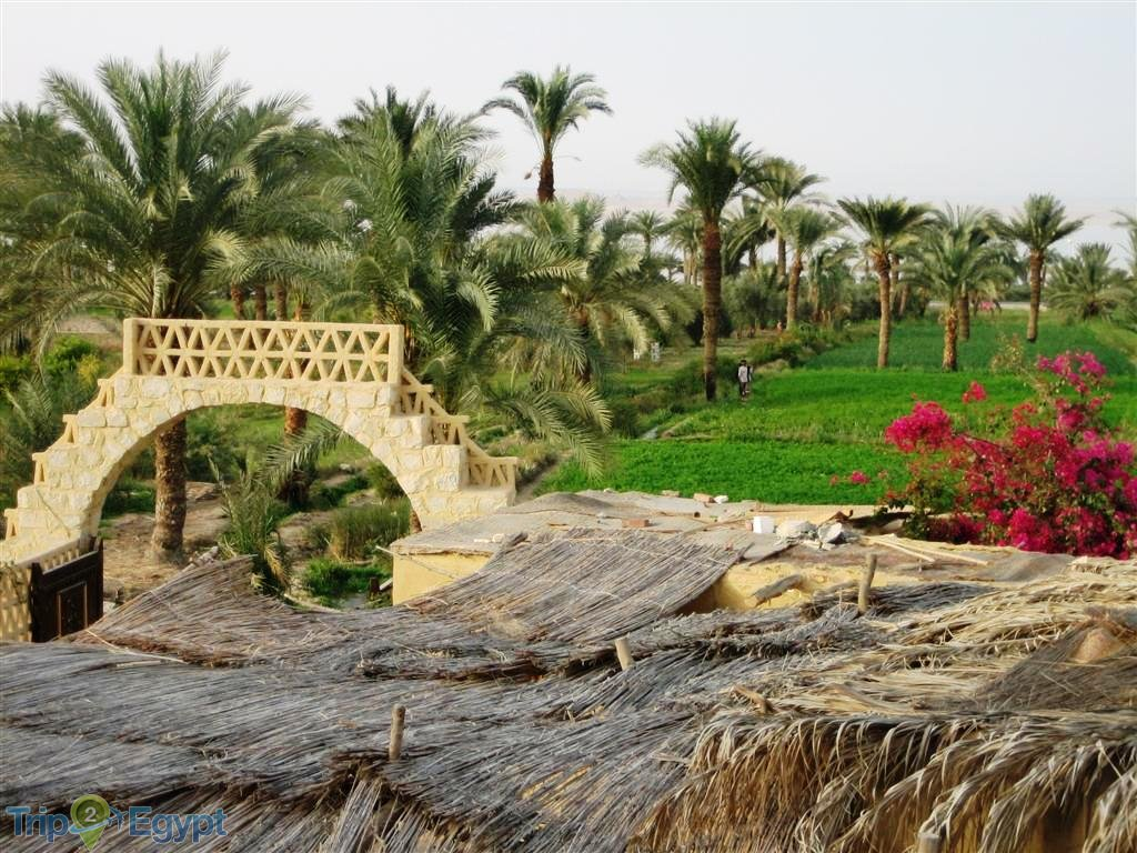Day Tour Fayoum Oasis and Wadi El Rayan