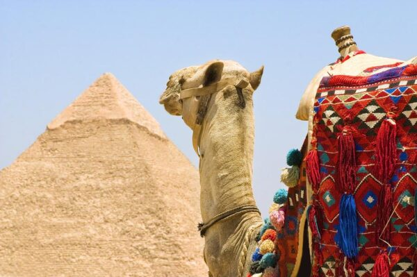 Camel ride Pyramids of Egypt