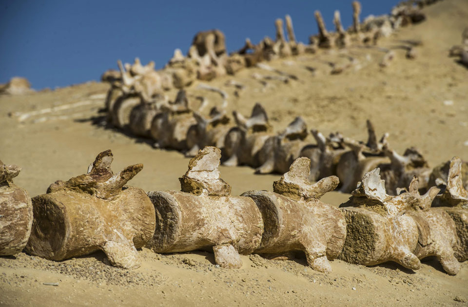 Wadi Hitan, Valley of the Whales,Whales Valley,