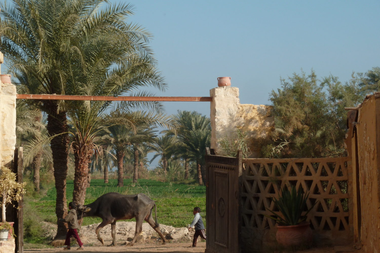 Fayoum Oasis, Deluxe Tours Egypt, Day tour to fayoum