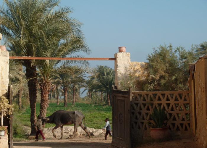 Fayoum Oasis, Deluxe Tours Egypt, Day tour to fayoum