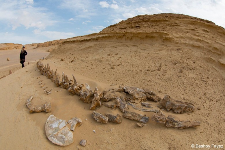 Valley of the whales, whales valley, wadi hitan, UNESCO world heritage site