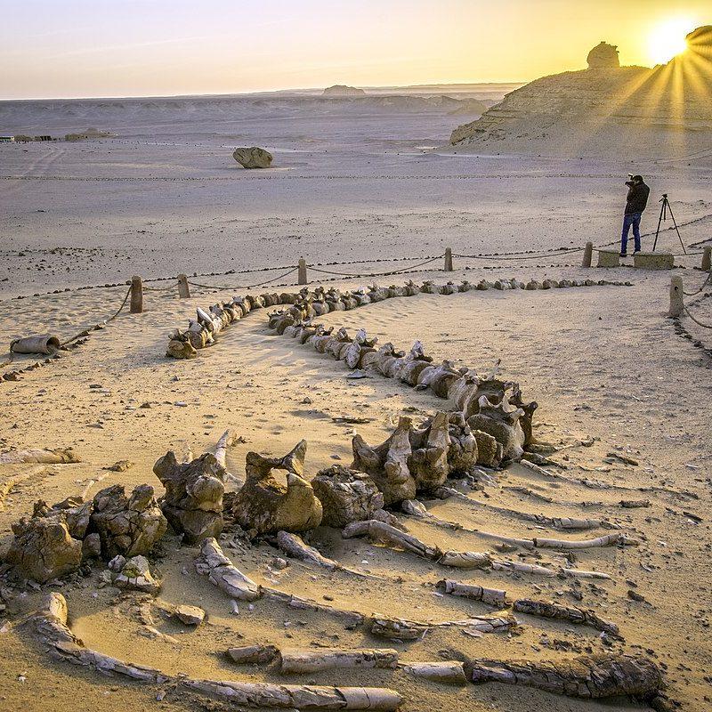 Wadi Hitan Whales Valley Fayoum, Deluxe Tours Egypt