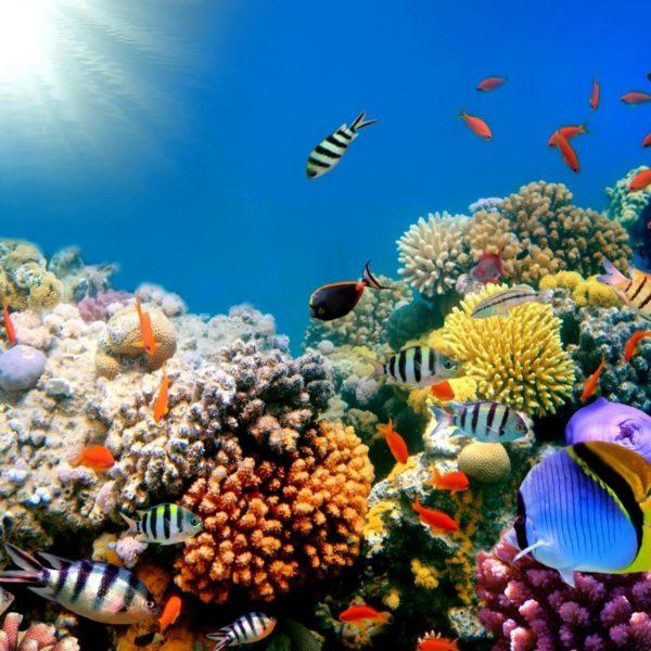 Hurghada, Hurghada Egypt, Hurghada Red Sea, Hurghada tours