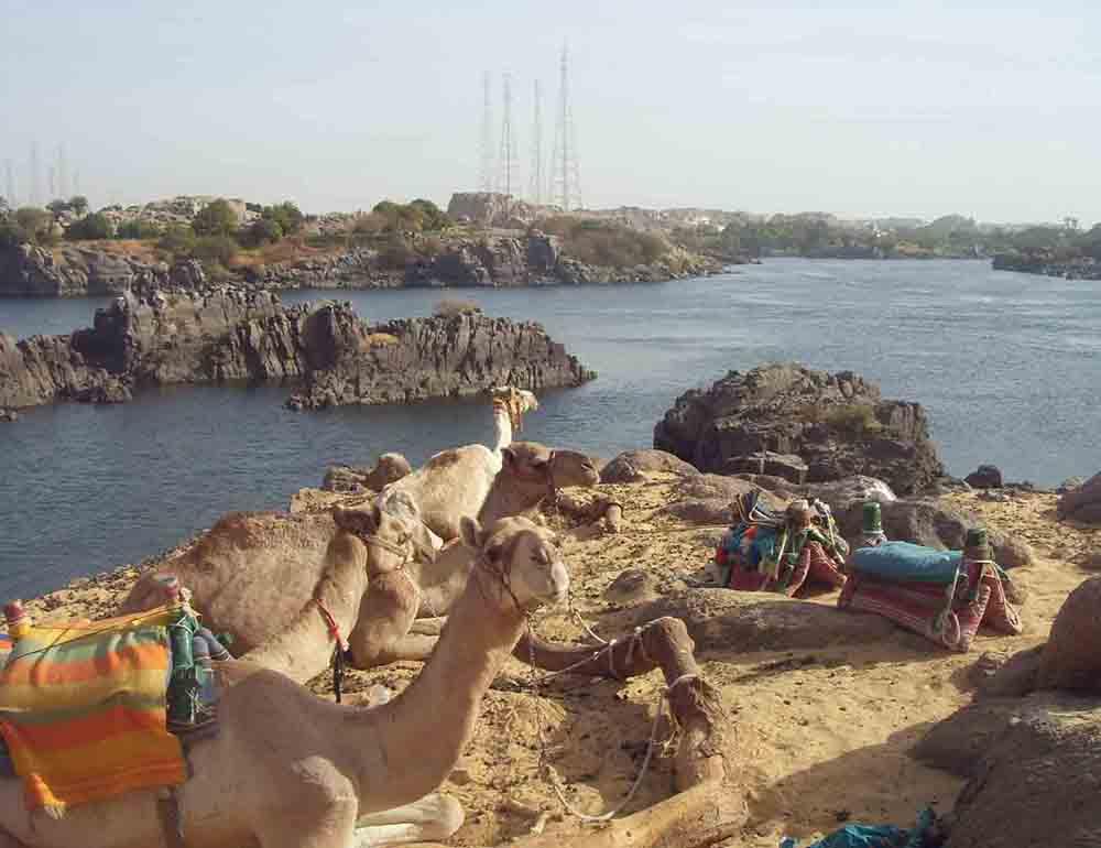 camels aswan nubian village