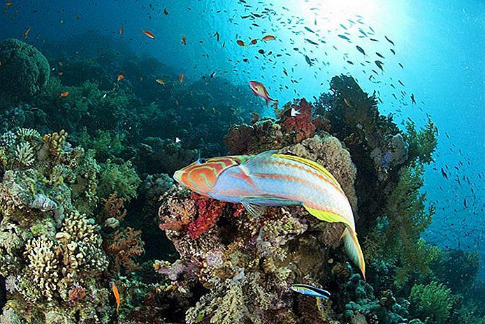 Sharm El Sheikh, Thomas Reef